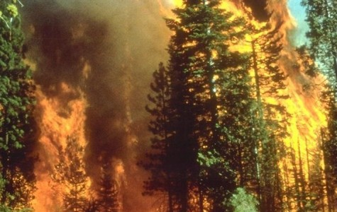 How you can help those affected by the California wildfires