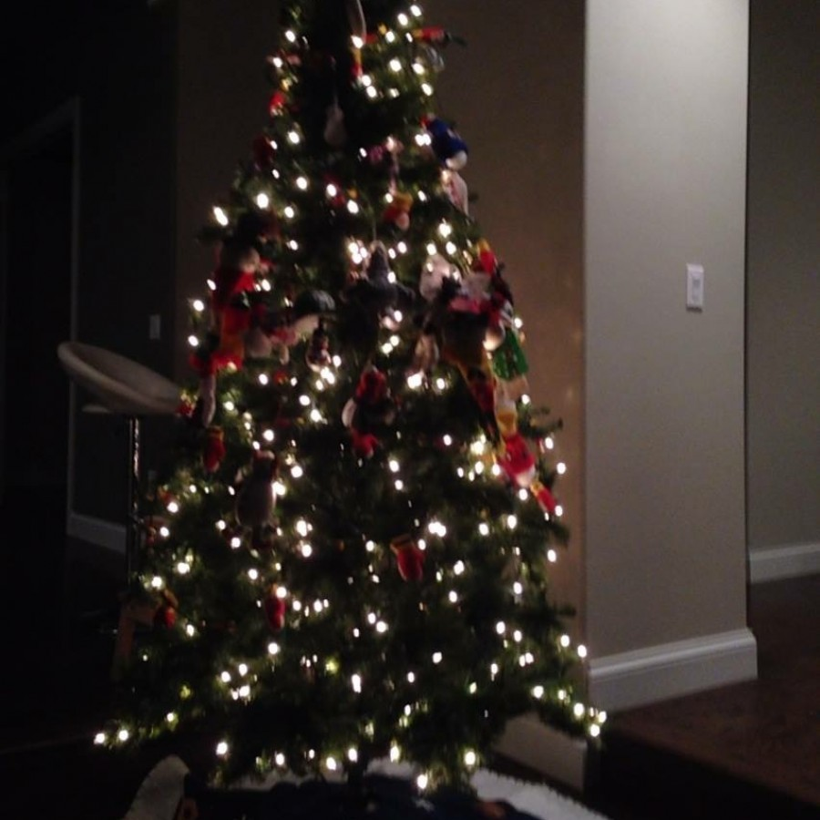 Senior+Ava+Stigler%2C+an+atheist%2C+celebrates+this+time+of+year+by+putting+up+a+tree.%0A