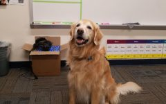 Mojo is a service dog who helps high schoolers with depression and anxiety.