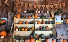 "Pumpkins and a ""Give Thanks"" banner are captured at Shady Knoll Farm in East Moline, a place at which many families spend time for fall traditions."