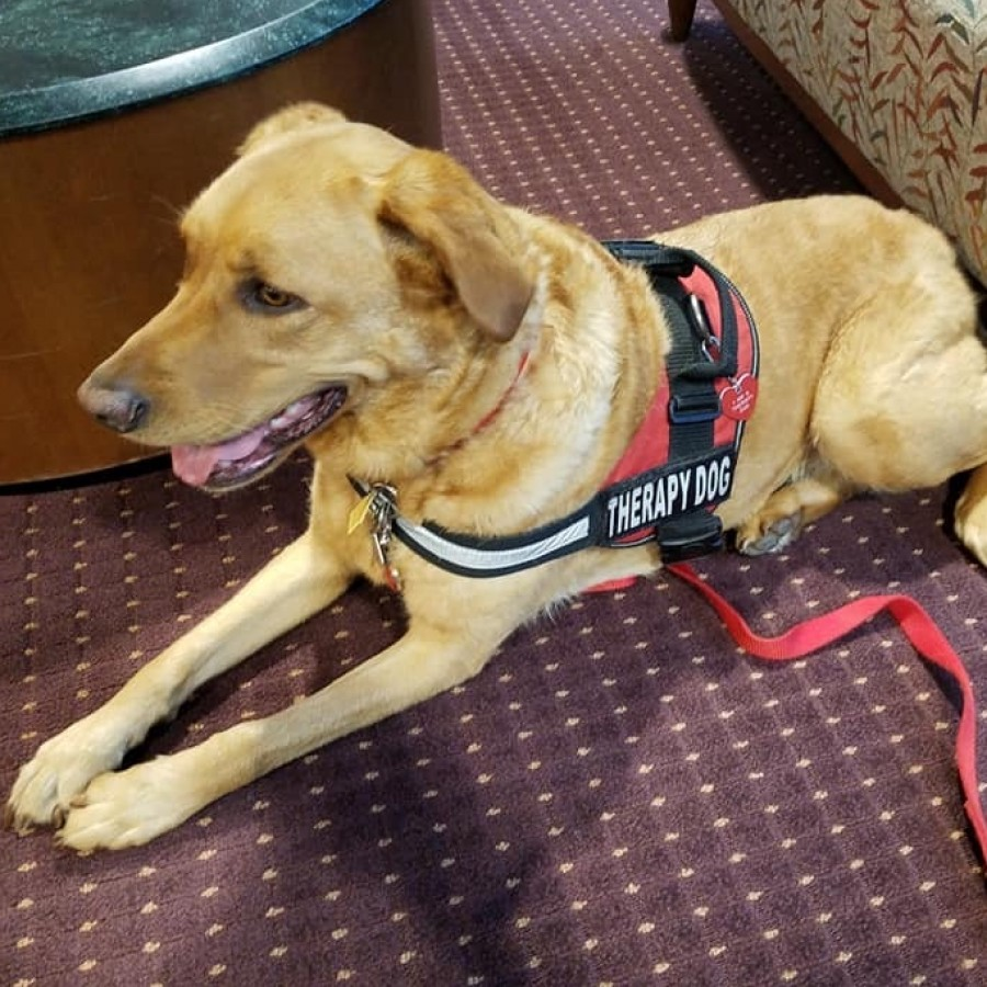 Riverdale Heights therapy dog Molly patiently waits outside a classroom for her kids.