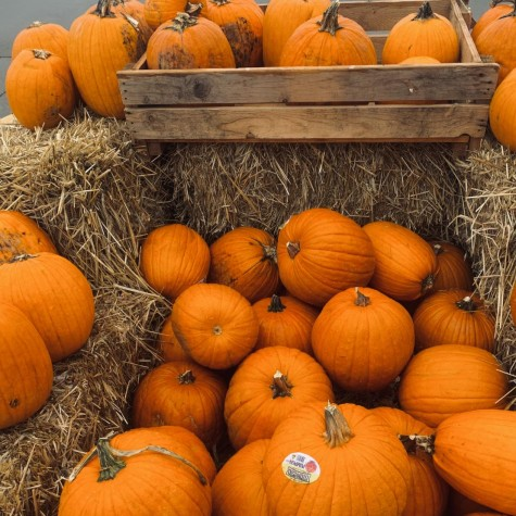 Pumpkin spice is a fall favorite. There are an abundance of pumpkin spice products on the market.