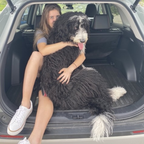 Dogs can easily get bored home alone. Sometimes we don't have enough time to give them enough attention. By getting creative, your furry friend can have fun even while you're away from home